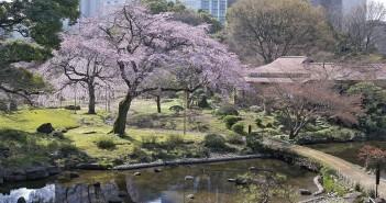 Cherry blossoms 2020 at Koishikawa Korakuen Garden