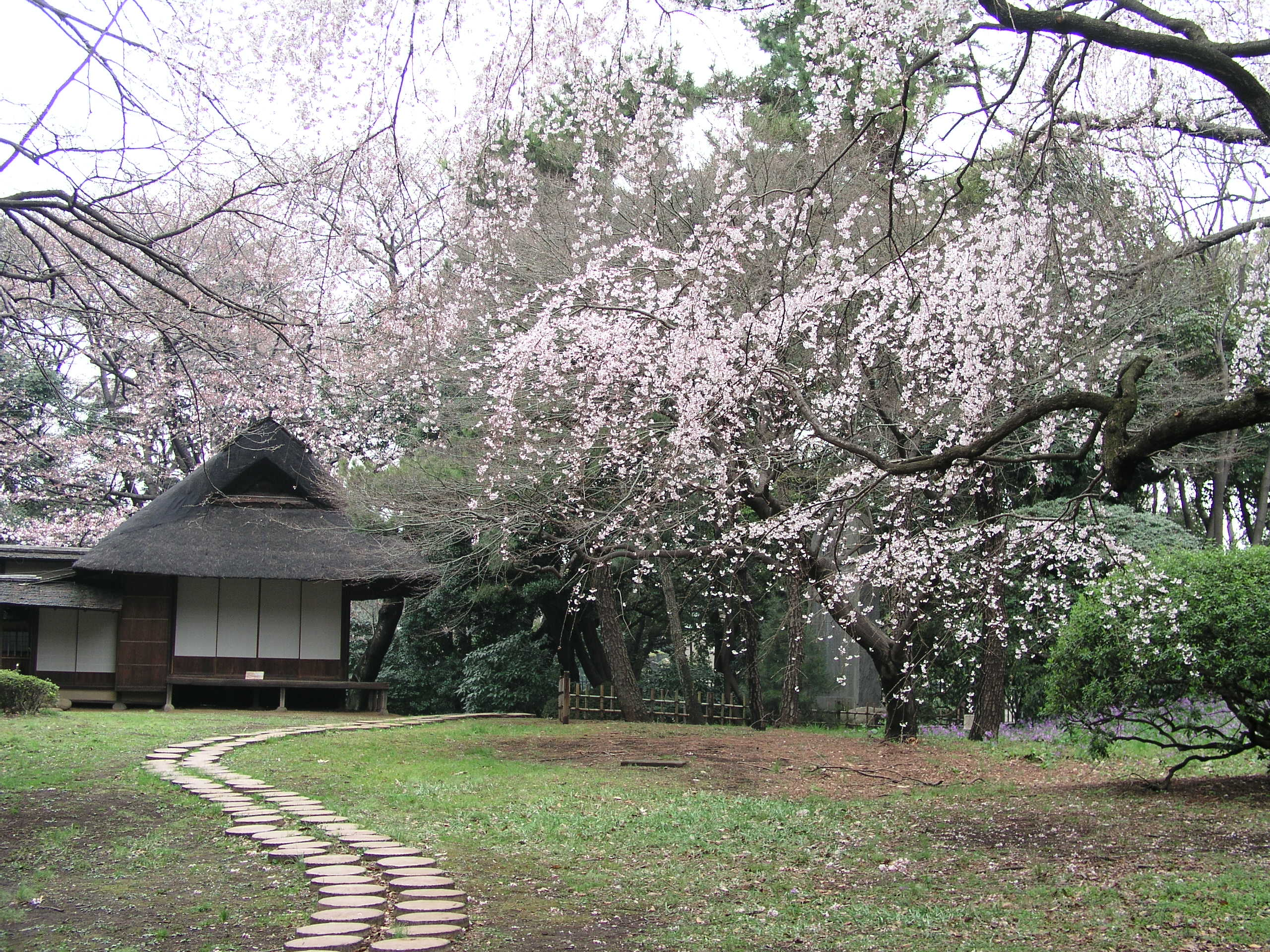 Spring time Opening of the Museum Garden © The Tokyo National Museum