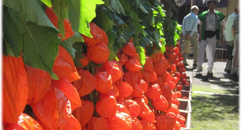 Physalis Market at Asahi Shrine in Roppongi – decked with large lantern flowers (amuzen article)