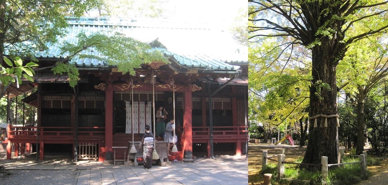 Akasaka Hikawa Festival 2016 – special edition (amuzen article)