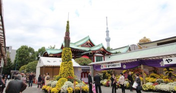 Chrysanthemum Festival 2016 at Kameido Tenjin Shrine, Tokyo (amuzen article)