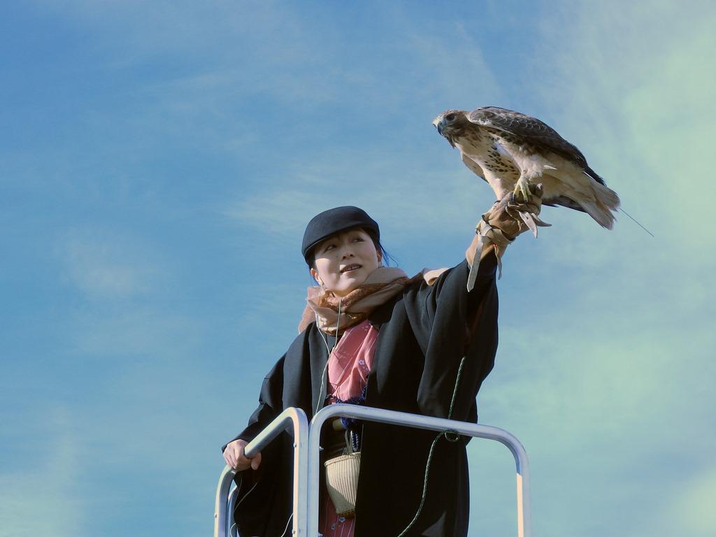 New Year's flight of falcons at Hama-rikyu Garden (amuzen article)