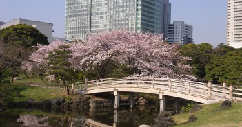 Cherry blossoms 2017 in Hamarikyu Garden (amuzen article)