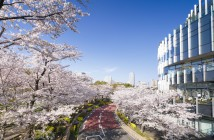 Cherry blossoms 2020 at Tokyo Midtown
