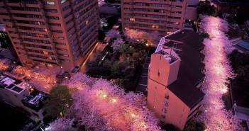 Sakura Festival 2017 at ARK Hills (amuzen article)
