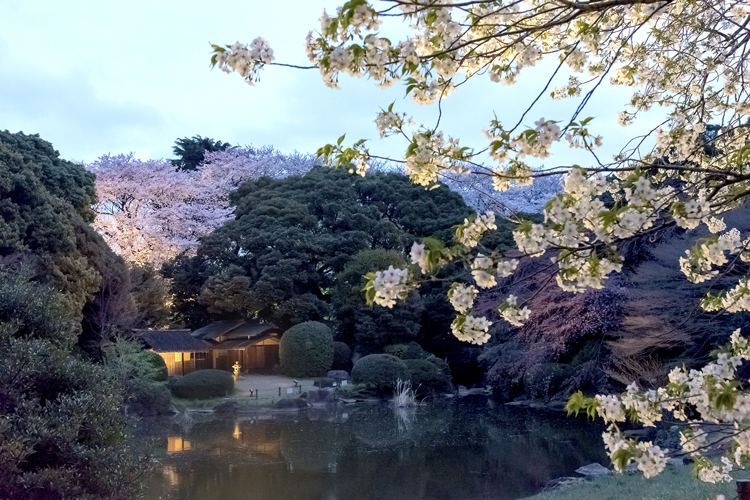 Cherry Blossom Viewing at the Tokyo National Museum 2017 (amuzen article)