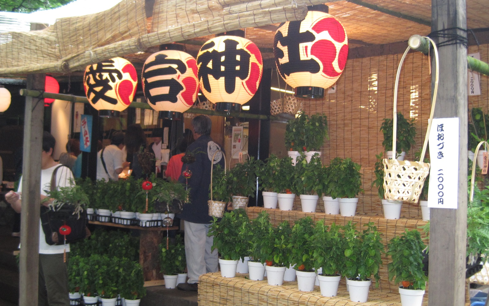 1000-day worship & physalis market at Atago Shrine 2017 (amuzen article)