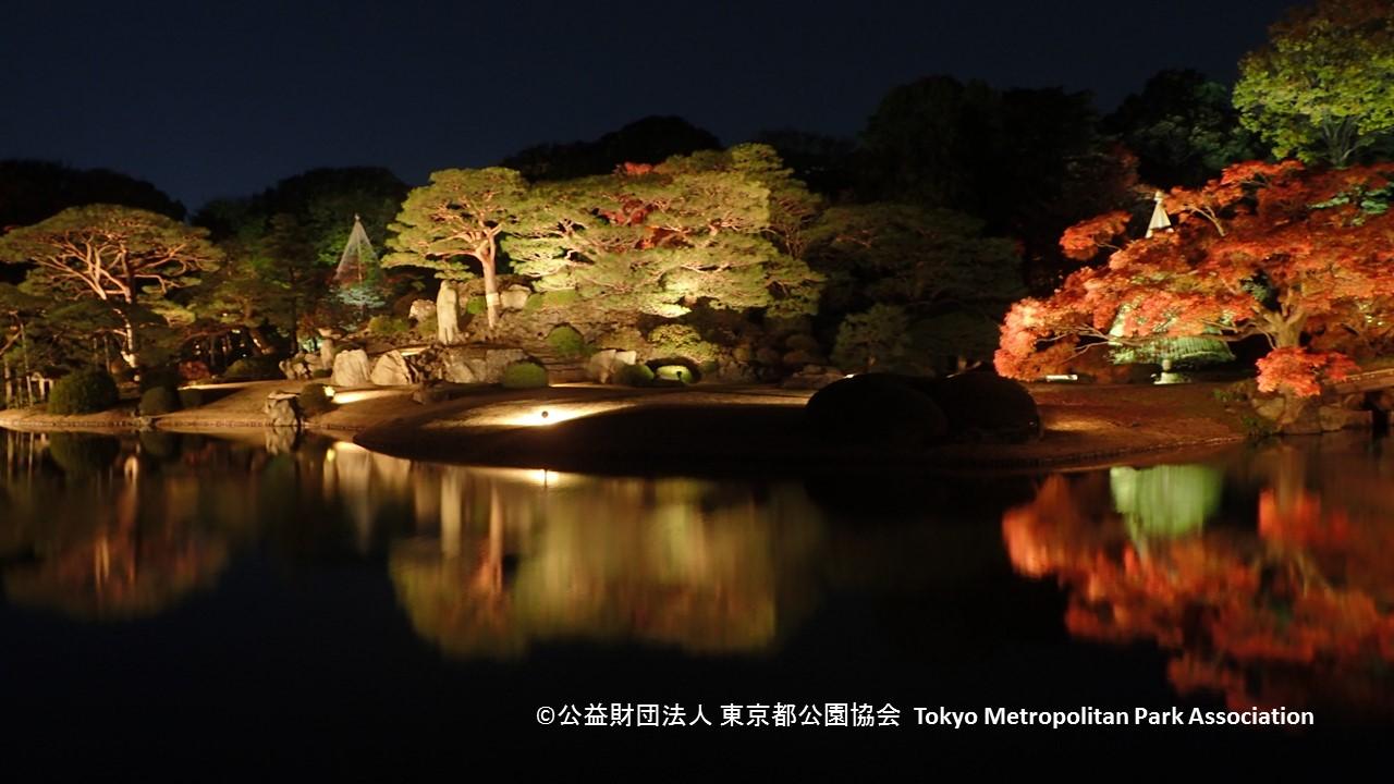 Lighting of autumn foliage 2017 at the Rikugi-en Garden