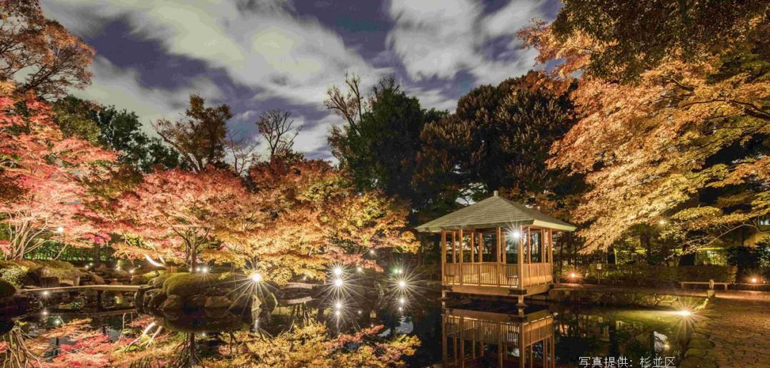 Lighting of autumn leaves at Otaguro Park