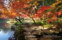 Autumn leaves 2017 at Koishikawa Korakuen Garden