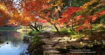 Autumn leaves 2017 at Koishikawa Korakuen Garden