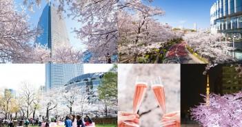 "amuzen ""Cherry blossom 2018 at Tokyo Midtown"""