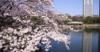 "amuzen ""Cherry blossoms in Hamarikyu Garden"""