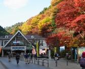 Mount Takao Fall Foliage Festival 2019