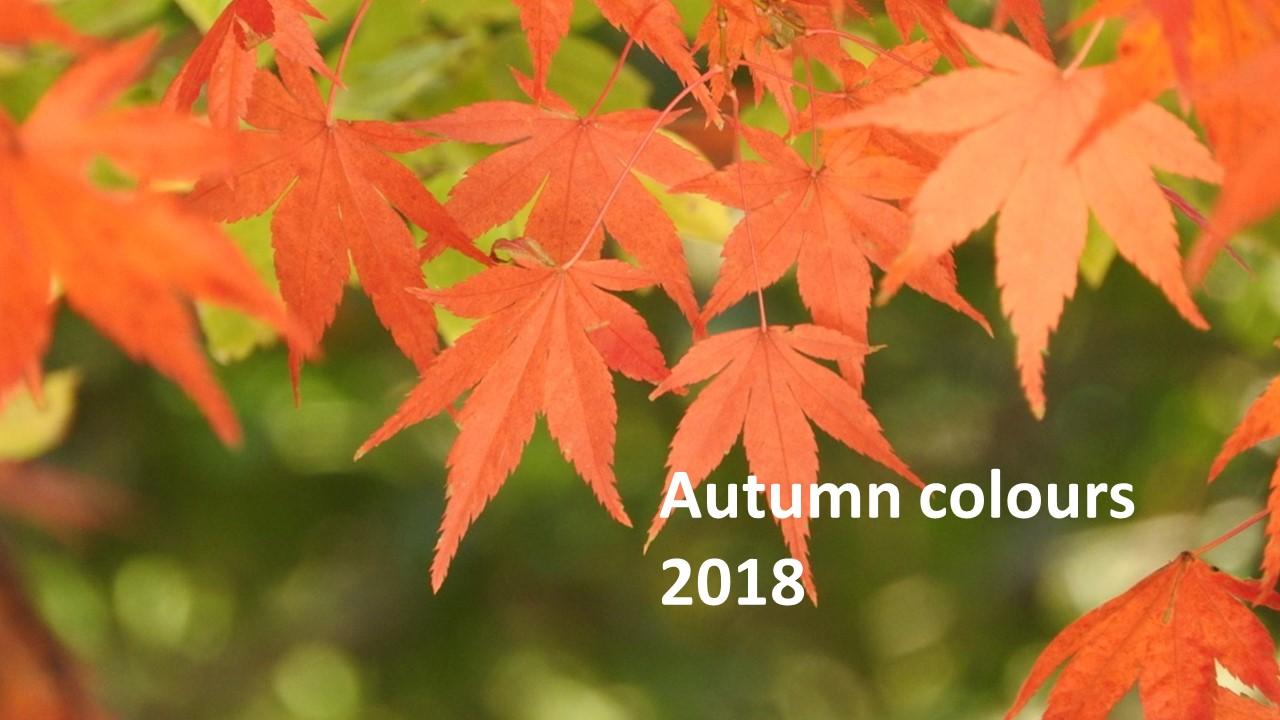Autumn colours and events 2018 in Tokyo
