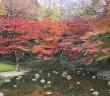Autumn leaves 2018 at Koishikawa Korakuen Garden