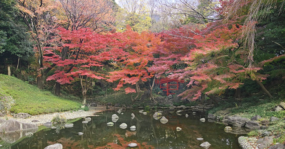 Autumn leaves 2019 at Koishikawa Korakuen Garden
