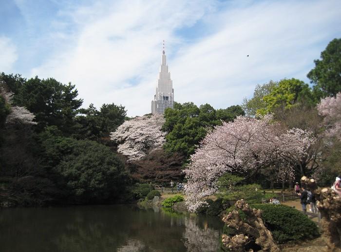 Cherry blossoms 2019 at Sinjuku Gyoen