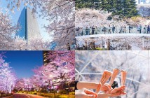Cherry blossoms 2019 at Tokyo Midtown