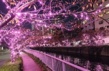 Meguro River Minna-no Illumination 2019