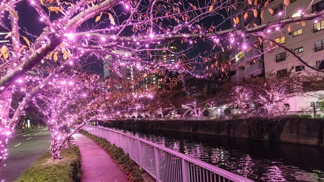Meguro River Minna-no Illumination 2019