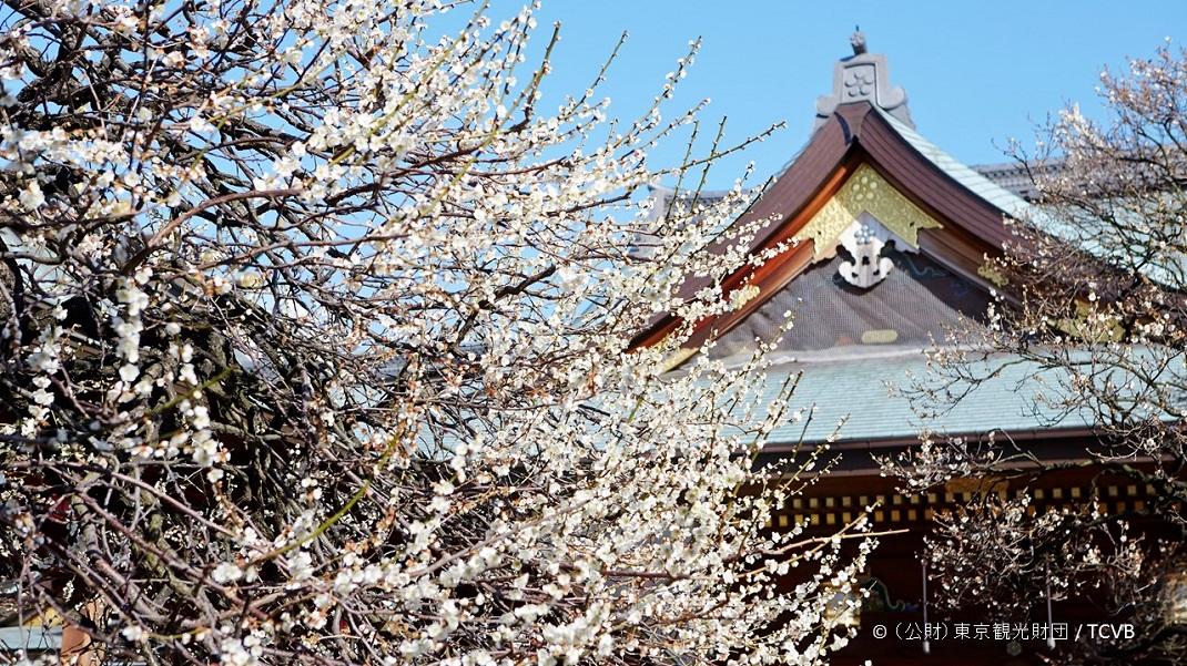 Bunkyo plum blossom festival (ume matsuri) 2020