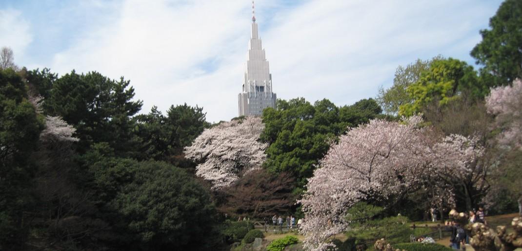 Cherry blossoms 2020 at Sinjuku Gyoen
