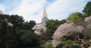 Cherry blossoms 2020 at Sinjuku Gyoen